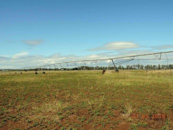 View profile: 188 Acres of superb 'cropping' country