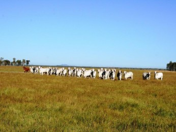 View profile: 1620 Acres currently carrying 500 Bullocks