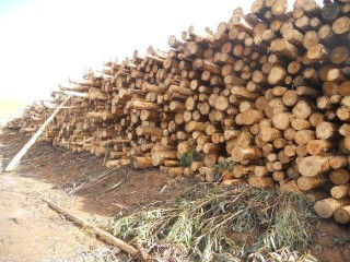 View profile: Tasmanian Plantation Logging Operation,  Net Profit $1m+ Roi 29%