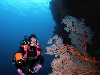 View profile: Great Barrier Reef Dive Centre