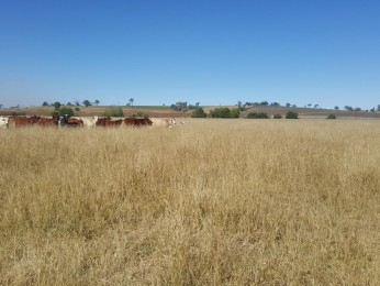 View profile: PRIME FARMING COUNTRY WITH FANTASTIC WATER