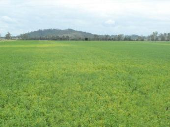 View profile: 650 acres , lucerne , Grazing  , Cropping , it's all here !